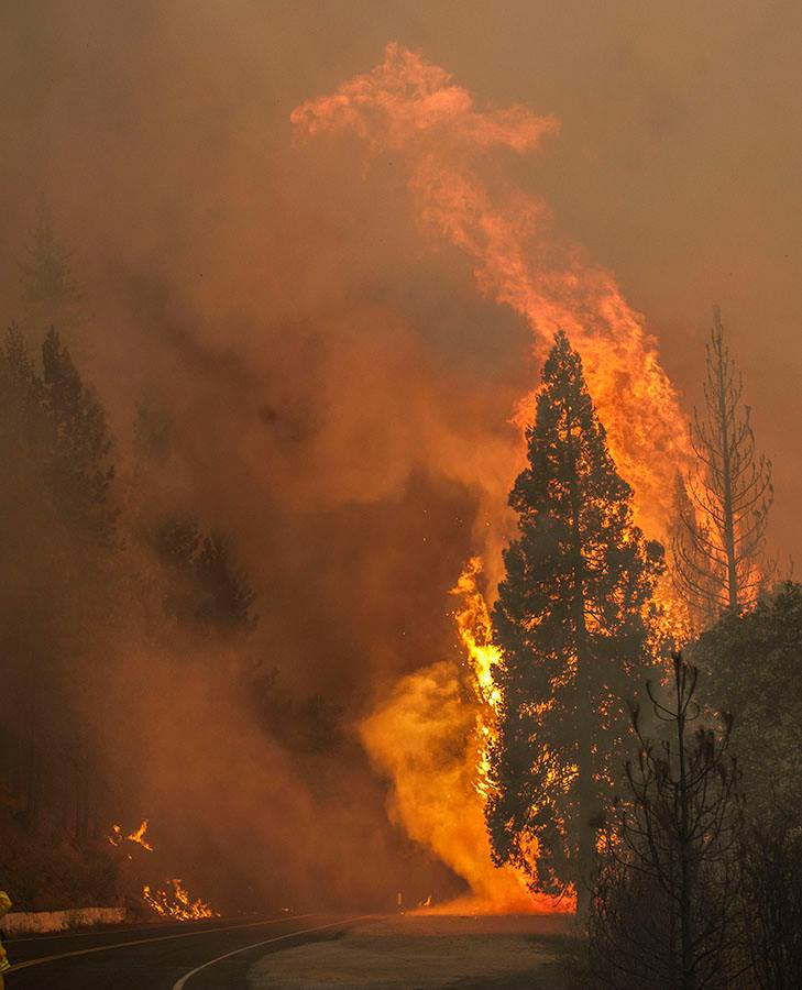 Large flames engulf trees as the RIM FIRE jumps the road