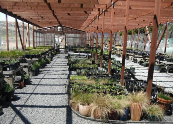 Mountain Plant Sale at the Mission Blue Nursery Slated for November 18th