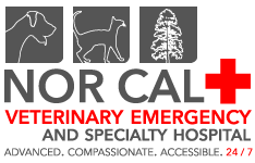 NORCAL Veterinarian Emergency & Specialty Hospital