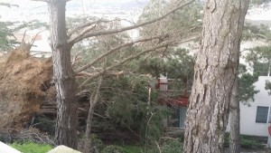 High winds leave a damage behind
