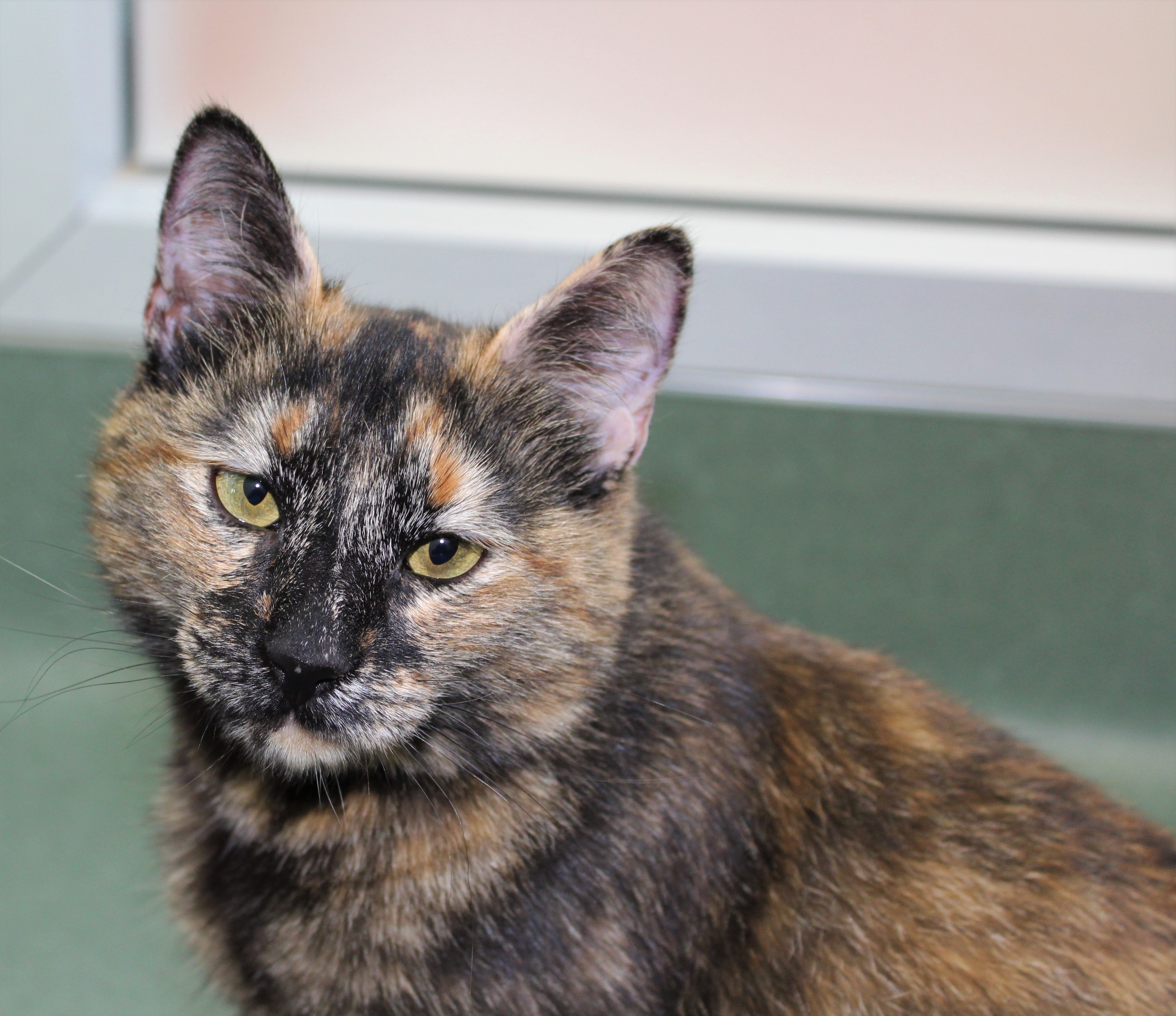 Peninsula Humane Society & SPCA's Pet of the Week: Mathilda