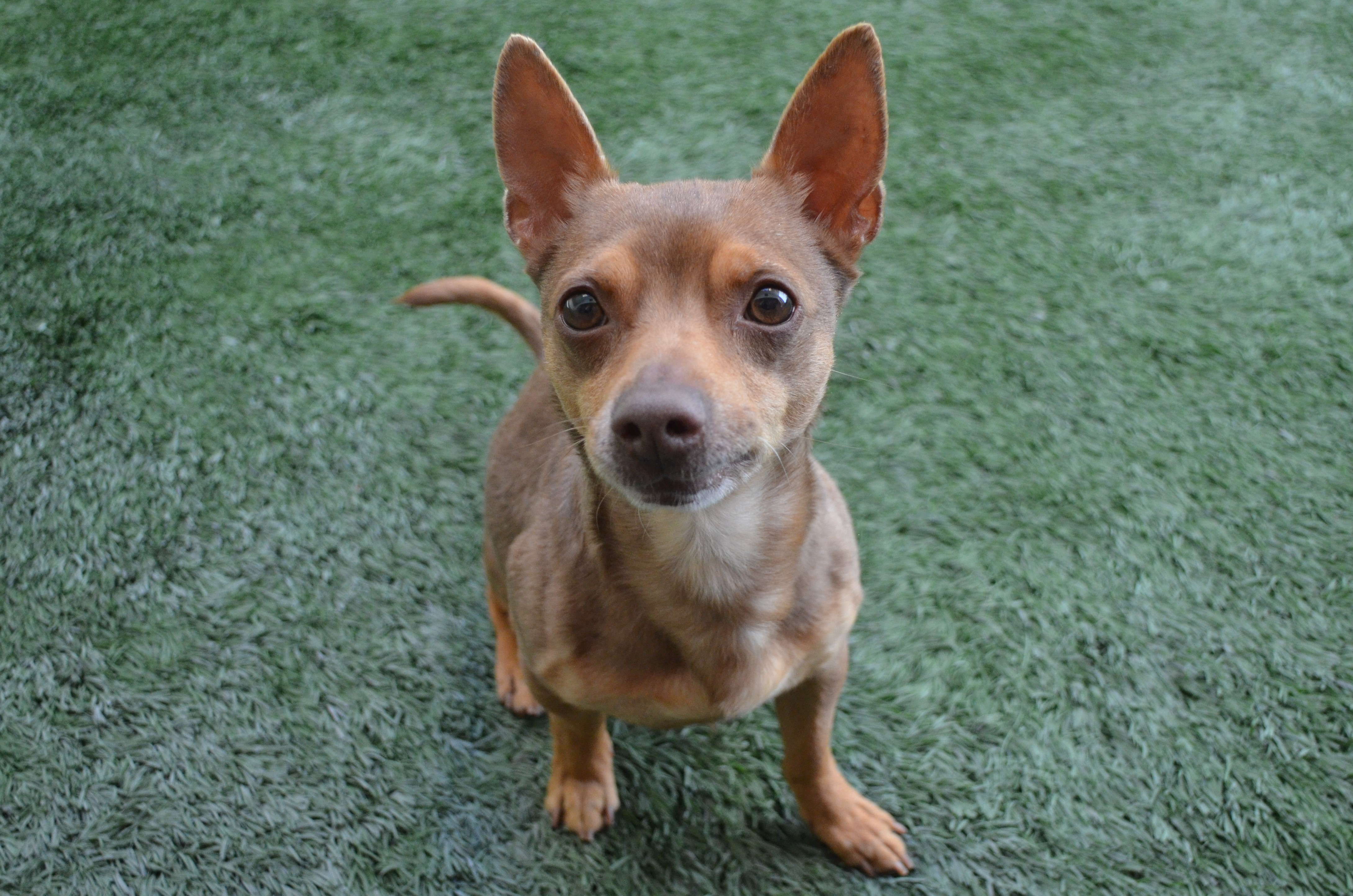 Peninsula Humane Society and SPCA's Pet of the Week: Snickers