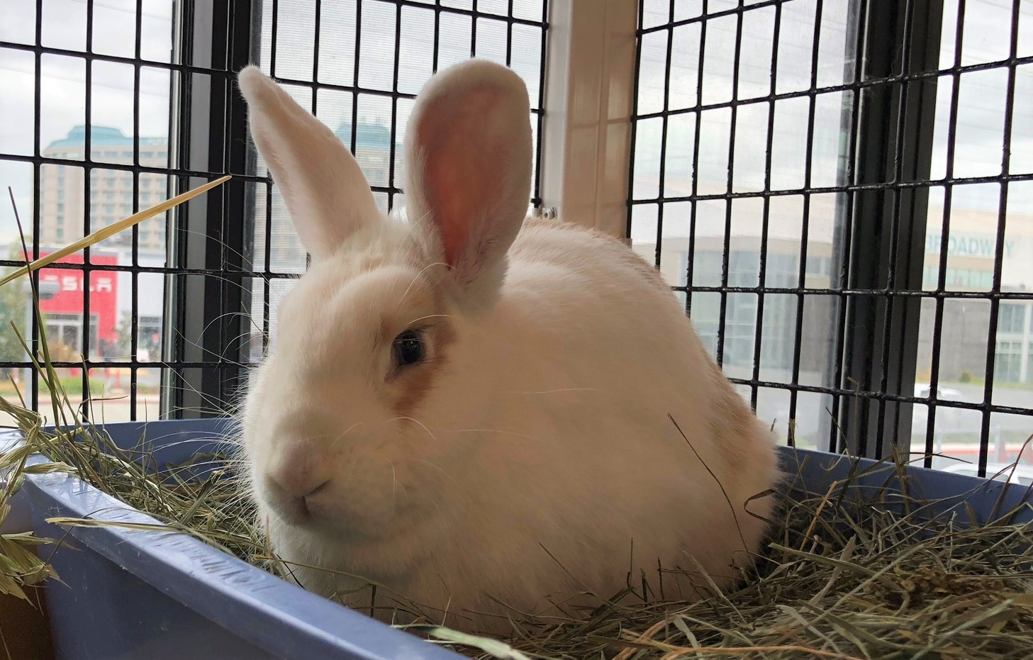 Peninsula Humane Society and SPCA's Pet of the Week: Snow White